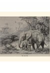 Natur Tiere Saeugetiere Elephanten _00002_gr.jpg