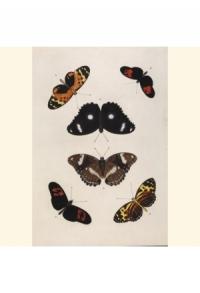 Natur Tiere Schmetterlinge_00038_gr.jpg