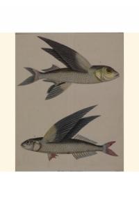 Tiere  Wassertiere Fische_00001_gr.jpg