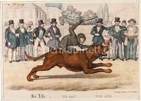 Affe als Jockey auf einem Hunderennen
