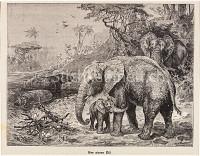 Elefanten udn Flusspferde am oberen Nil